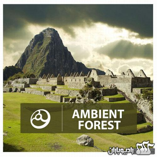 Various Artists - Ambient Forest (2014)