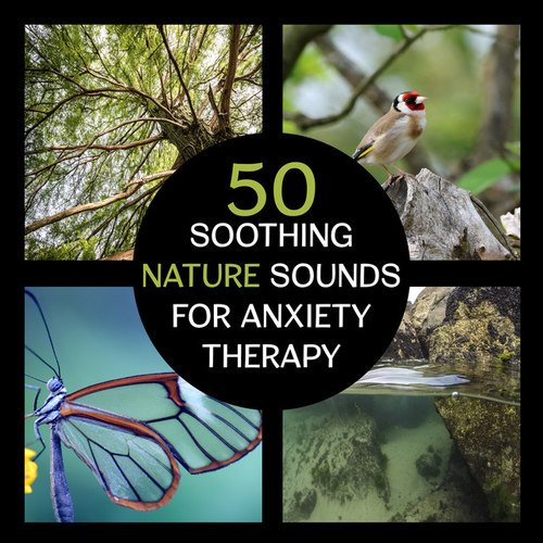 %دانلود آلبوم موسیقی 50 Soothing Nature Sounds for Anxiety Therapy